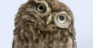 An image of a wise owl
